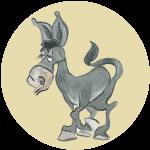 karoooo-donkey